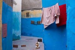 Gata Kitty Cat på gatorna av Essaouira i Marocko i den fiska porten och medina nära den kulöra väggen vykort fotografering för bildbyråer