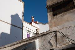Gata Kitty Cat på gatorna av Essaouira i Marocko i den fiska porten och medina nära den kulöra väggen vykort royaltyfri fotografi