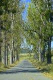 Gata med arrangera i rak linje träd arkivfoton