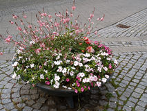 Gata med blommakrukar Royaltyfria Foton