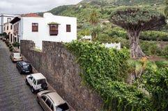 Gata med parkerade bilar, bredvid den växande forntida Dragon Tree Dracaena fotografering för bildbyråer
