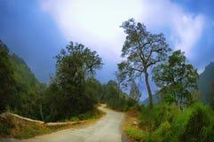Gata mellan skogen och träd Royaltyfri Bild