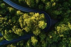 Gata mellan stora träd från överkant med den flyg- sikten för surr, landskap Arkivbilder