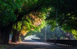 Gata som täckas med träd Arkivfoton