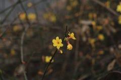 Gatablomman av den tidiga våren i Peking Fotografering för Bildbyråer