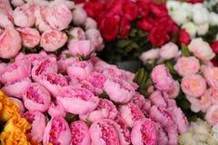 Gatablomsterhandlare i södra Frankrike, färgrika nya blommor i den huvudsakliga gatan av Cannes royaltyfri foto