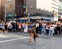 Gatadansare på Union Square i Manhattan Arkivfoto