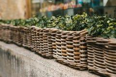 Gatadekor Serie av härliga vide- korgar med utomhus- växter Royaltyfri Fotografi