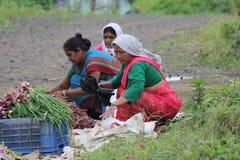 Gatafrukt och traditionellt återförsäljnings- för grönsaker shoppar i Indien arkivbild