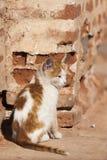 Gatakatt på Marrakesh Arkivfoton