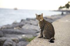 Gatakatten sitter på stranden royaltyfri bild
