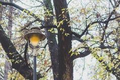 Gatalampa i parken Fotografering för Bildbyråer