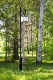 Gatalampa i parken Bakgrund av den soliga dagen för björkar Fotografering för Bildbyråer