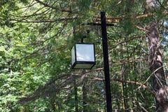 Gatalampa i parken Sörja bakgrund är en solig dag Fotografering för Bildbyråer