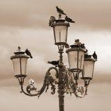 Gatalampa med duvorna i Venedig Royaltyfria Bilder