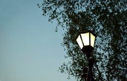 Gatalampa på en bakgrund av sidor av ett träd Arkivfoto