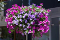 Gataljus med färgrika hängande petuniablommakorgar Fotografering för Bildbyråer
