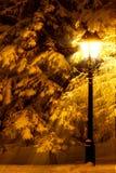 Gatalykta och granträd Royaltyfri Foto