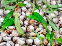Gatamarknad med vietnamesisk mat och cousine Hög av musslor, bästa sikt royaltyfri foto