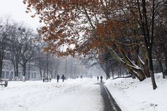 Gatan täckas med snöträdet arkivfoton