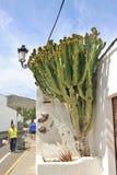 Gataplats med kaktuns i staden Haria, Lanzarote, Spanien Royaltyfri Fotografi