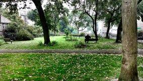 Gataträdgård Arkivbilder