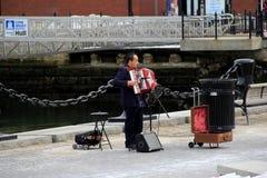 Gataunderhållare som spelar dragspelet, Boston, 2014 Royaltyfria Bilder