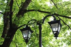 gatawhite för 8 eps isolerad lampor Fotografering för Bildbyråer
