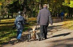 Gatchina,俄罗斯- 2015年10月3日:一条狗以伤残在Gatchina公园走 库存照片
