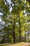 Gatchina Grand parc Images libres de droits
