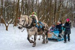 Gatchina, Russland - 18. Februar 2018: Pferdeschlitten-Fahrten während des Maslenitsa Das Pferd ist in den Äpfeln grau Eine Famil Lizenzfreie Stockfotografie