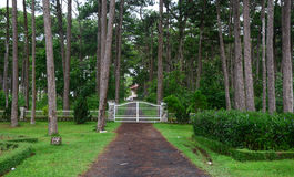 The gate of Bao Dai palace with many pine trees in Dalat, Vietnam Stock Photo