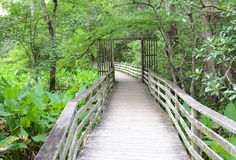 Gate and boardwalk in cypress forest Royalty Free Stock Photos