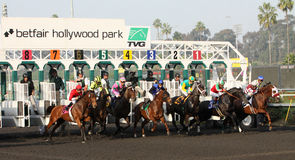 Gate Break for the 2012 Bayakoa Stakes Stock Photography