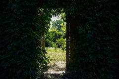 Gate in creeper-covered enclosure of yard in sunny summer aftern. Gate in the creeper-covered enclosure of a courtyard  in sunny summer afternoon Stock Photography