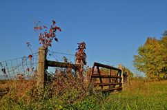Gate Decorated by Fall Colors. A rustic fence line and get are decorated by the vines and weeds in fall colors Stock Image
