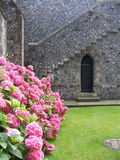 Gate Entrance. Hot Pink Hydrangeas at Castle Gate Entrance stock photography