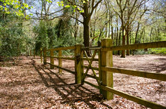 Gate and fence in forest. Perspective shot of a gate and fence in a forest setting Royalty Free Stock Image