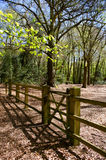 Gate and fence in forest setting Stock Photos