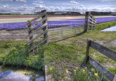 Gate in the Flowerfields royalty free stock photography