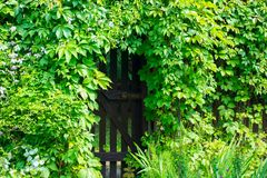 Gate in the hedge. Royalty Free Stock Photos