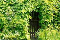 Gate in the hedge. Royalty Free Stock Image
