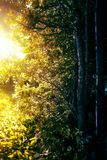 The gate between light and dark in nature Royalty Free Stock Photo