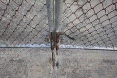Gate lock Stock Photo