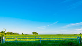 Gate of a meadow, Landscape of Bury St Edmunds, Suffolk, UK Stock Images