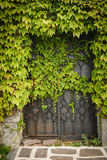 Gate. Old , metal gate covered with green ivy Royalty Free Stock Image