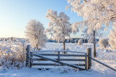 Gate at the pasture in winter Stock Image