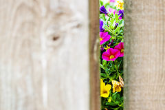 Through the Gate Royalty Free Stock Photography