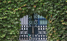 Gate with plants Royalty Free Stock Image