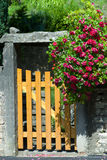 The gate with a rose bush. The gate with a blooming rose bush Royalty Free Stock Images